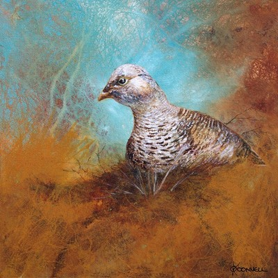 Scottish wildlife art prints