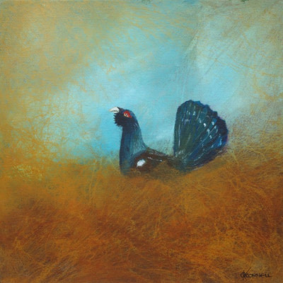 Scottish Capercaillie wildlife art